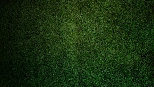 Gratis stockfoto met donkergroen, gras, grasachtig, grasmuur