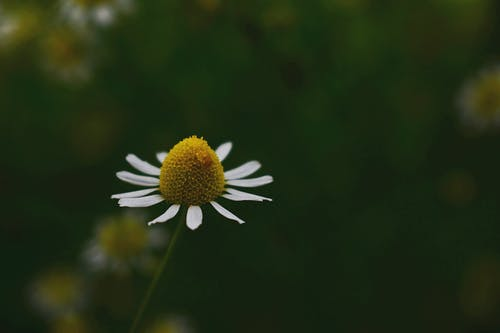 Gratis arkivbilde med bakgrunn, blomst, blomsterblad, blomstre