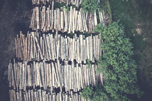 Aerial View of Logs and Trees