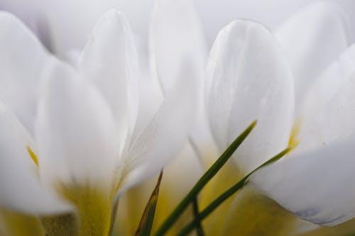 Základová fotografie zdarma na téma bílá, květiny, zblízka