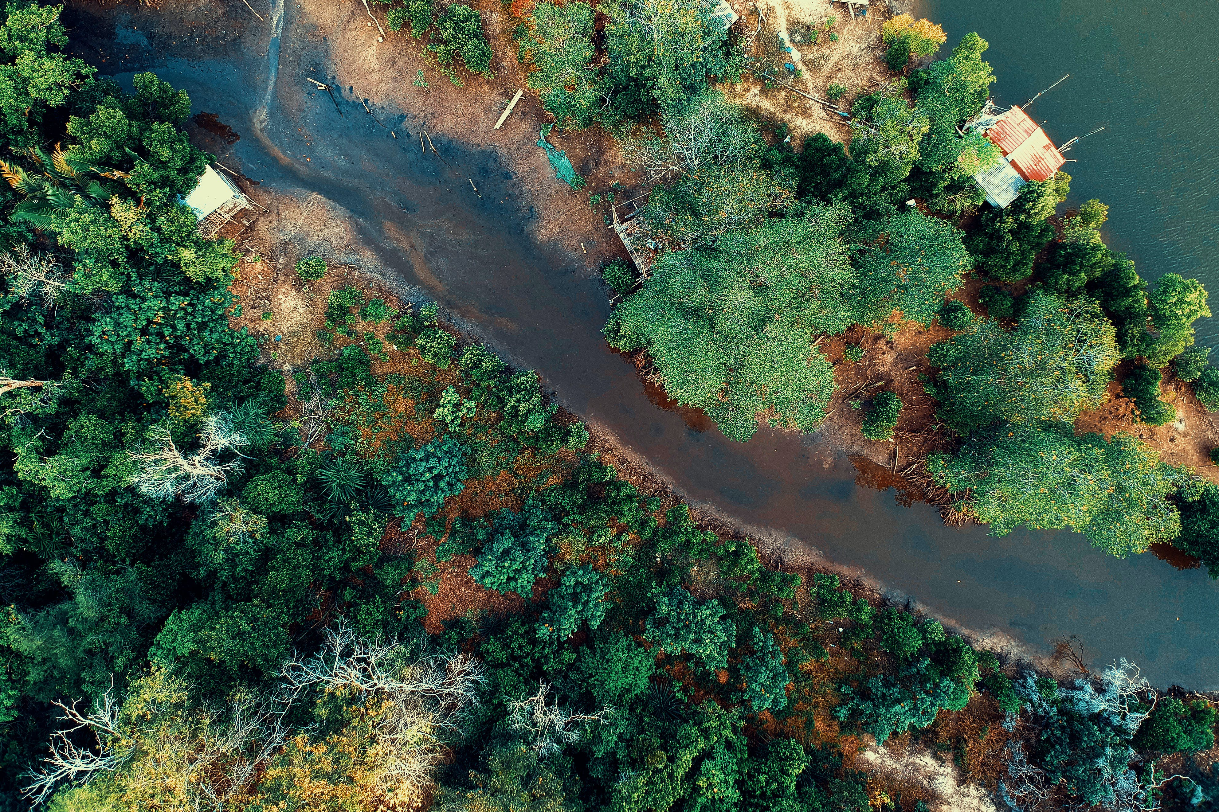 Aerial Photo of Body of Water Beside Green Trees