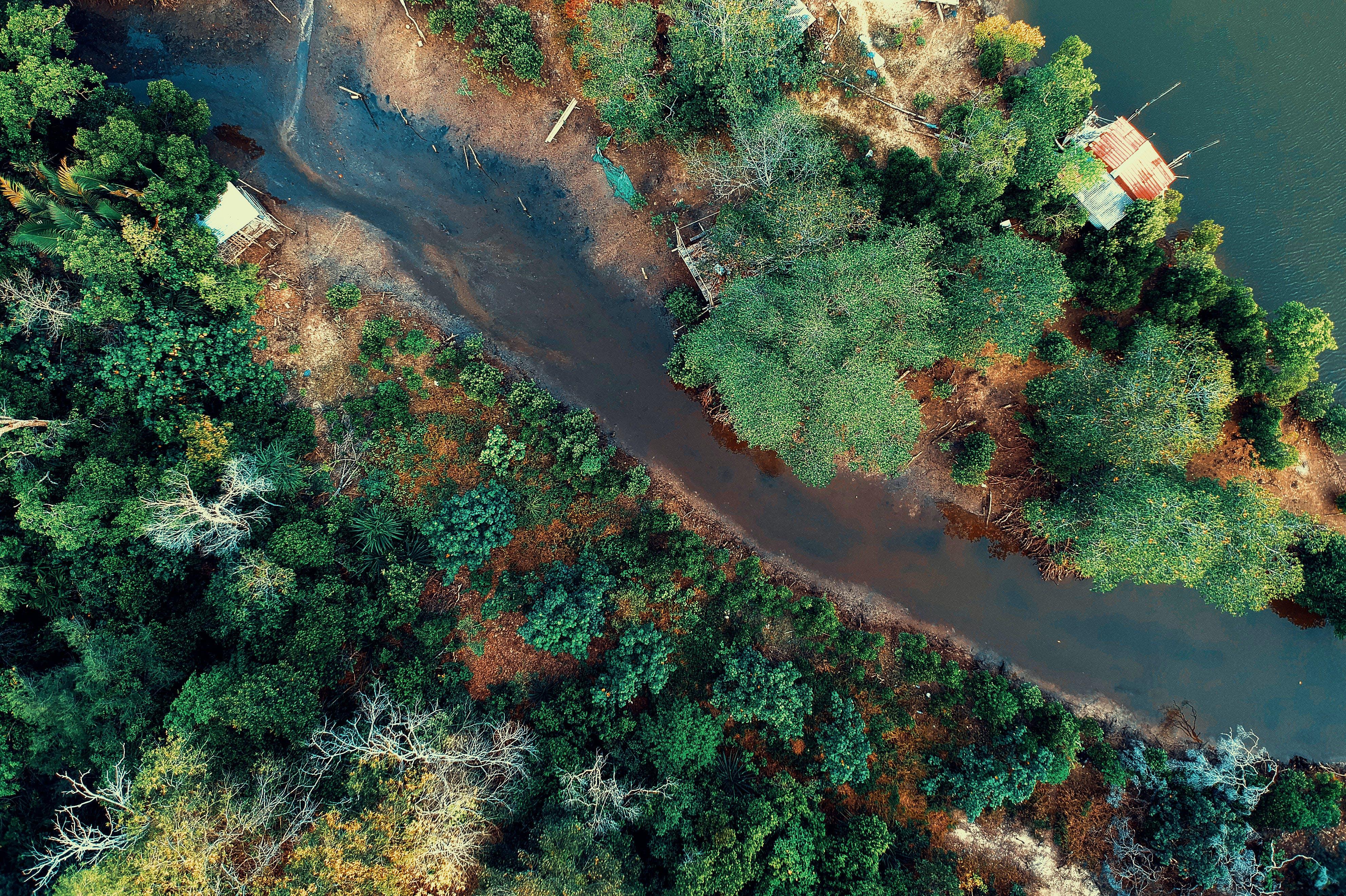 คลังภาพถ่ายฟรี ของ กลางวัน, ต้นไม้, น้ำ, บ้าน