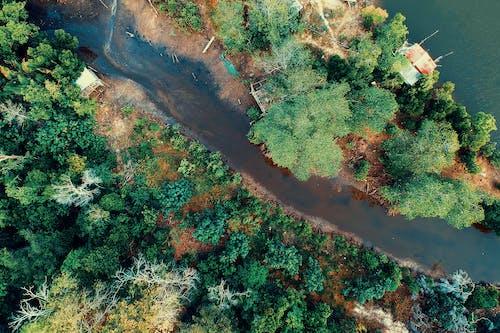 Darmowe zdjęcie z galerii z domy, drzewa, kolory, krajobraz