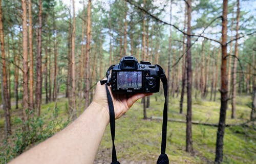 Person Showing Black Dslr Camera in Forest