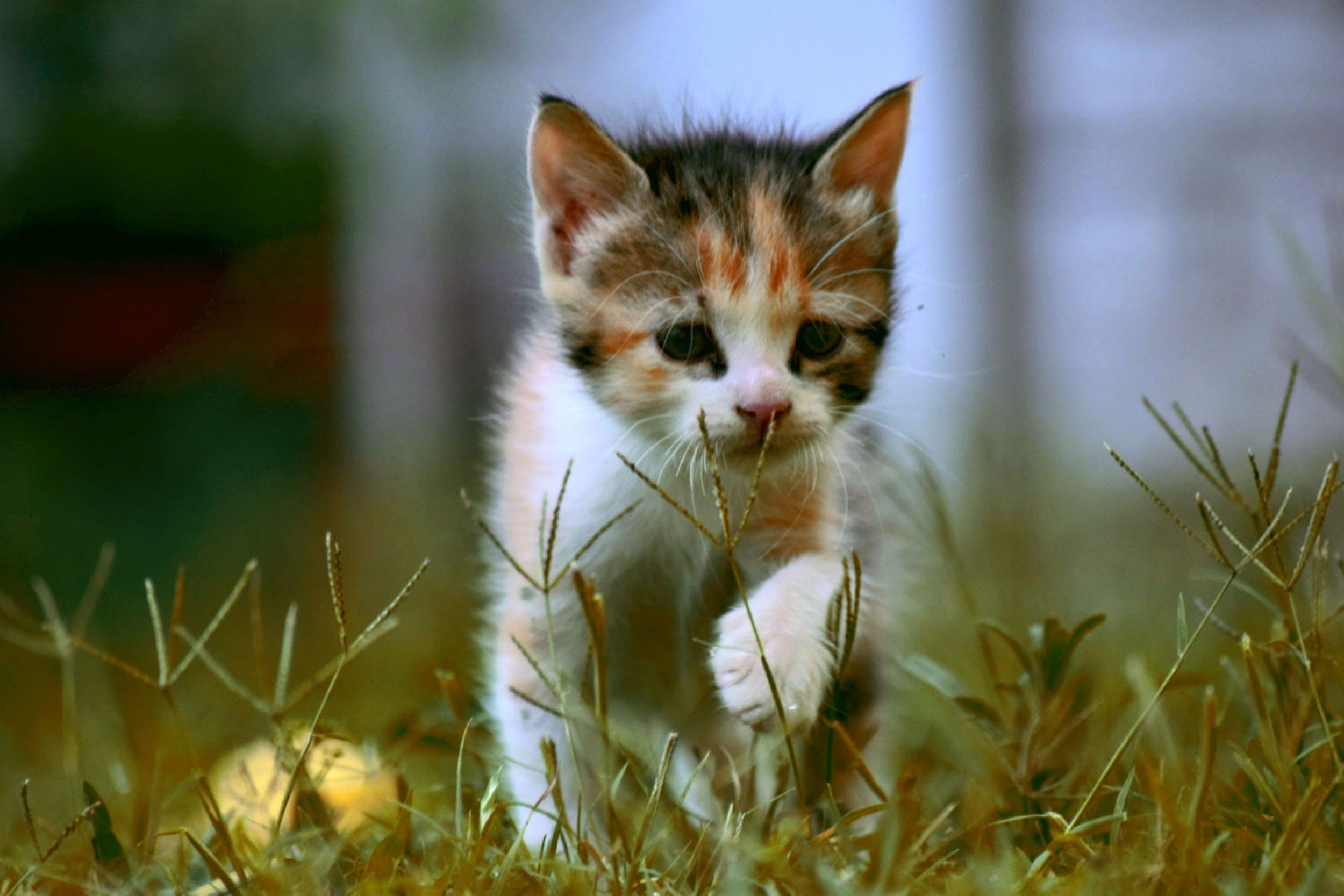 Free stock photo of adorable, animal, animal portrait, autumn leaves