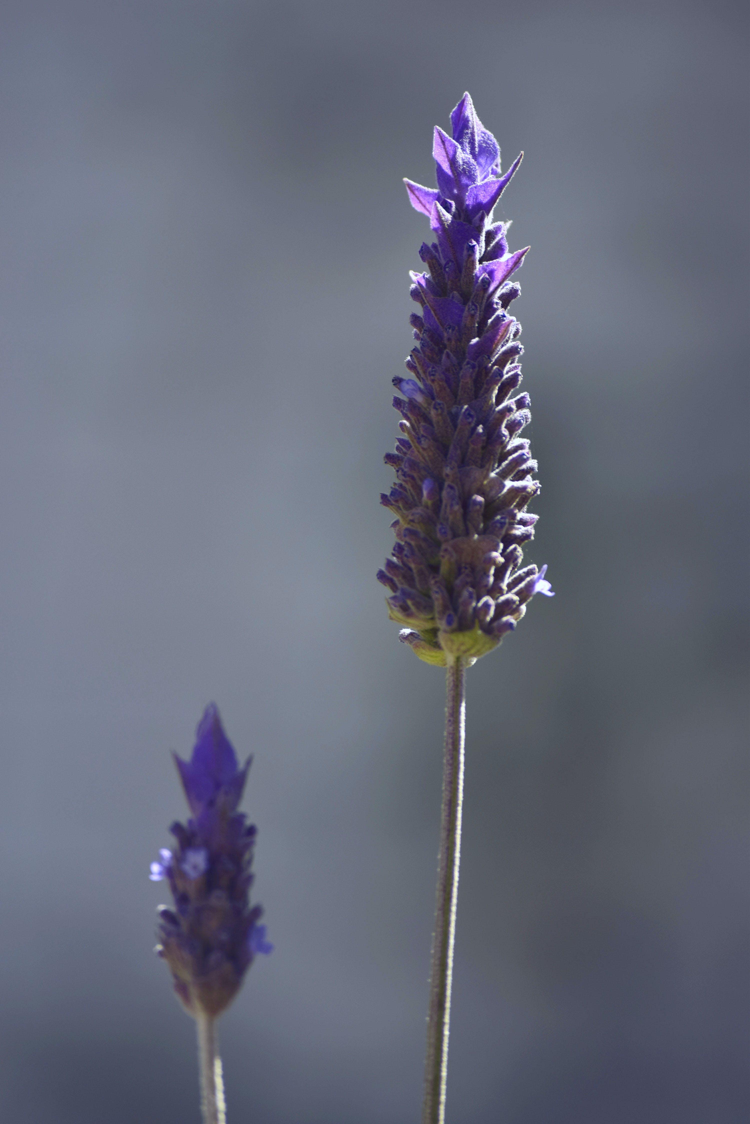 Free stock photo of 4k wallpaper, beautiful flowers, detail, flora