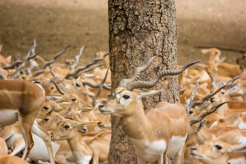 """Δωρεάν στοκ φωτογραφιών με """"#featured_wildlife #animals_illife # natureworld_n"""