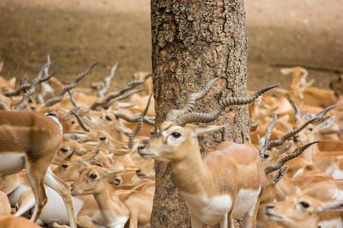Free stock photo of #featured_wildlife #animals_illife #natureworld_n