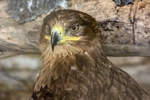 Δωρεάν στοκ φωτογραφιών με #birds, #eagle #eagles #bird #birdphotography, wareagle, αετός