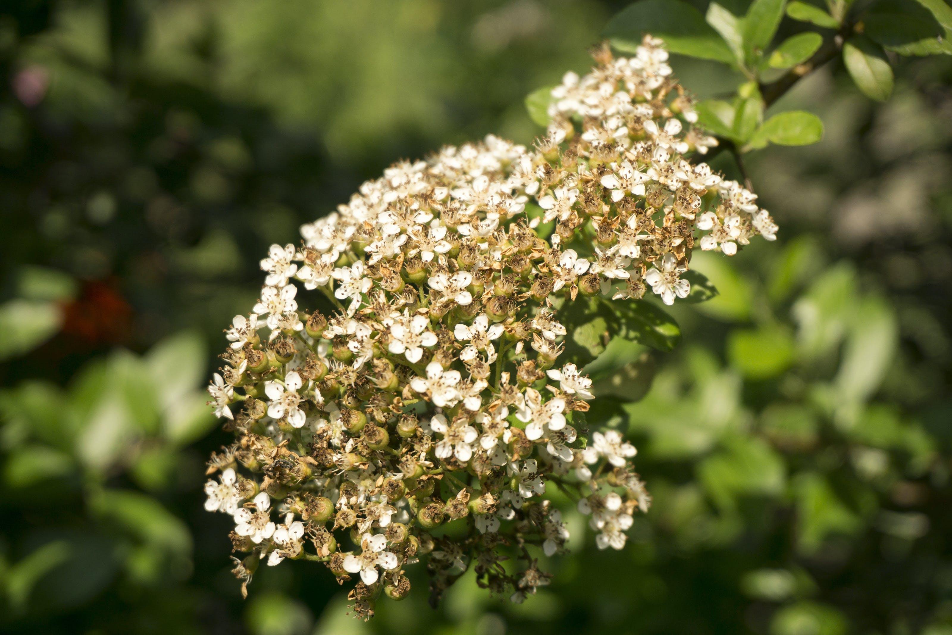 Free stock photo of garden, wildflower