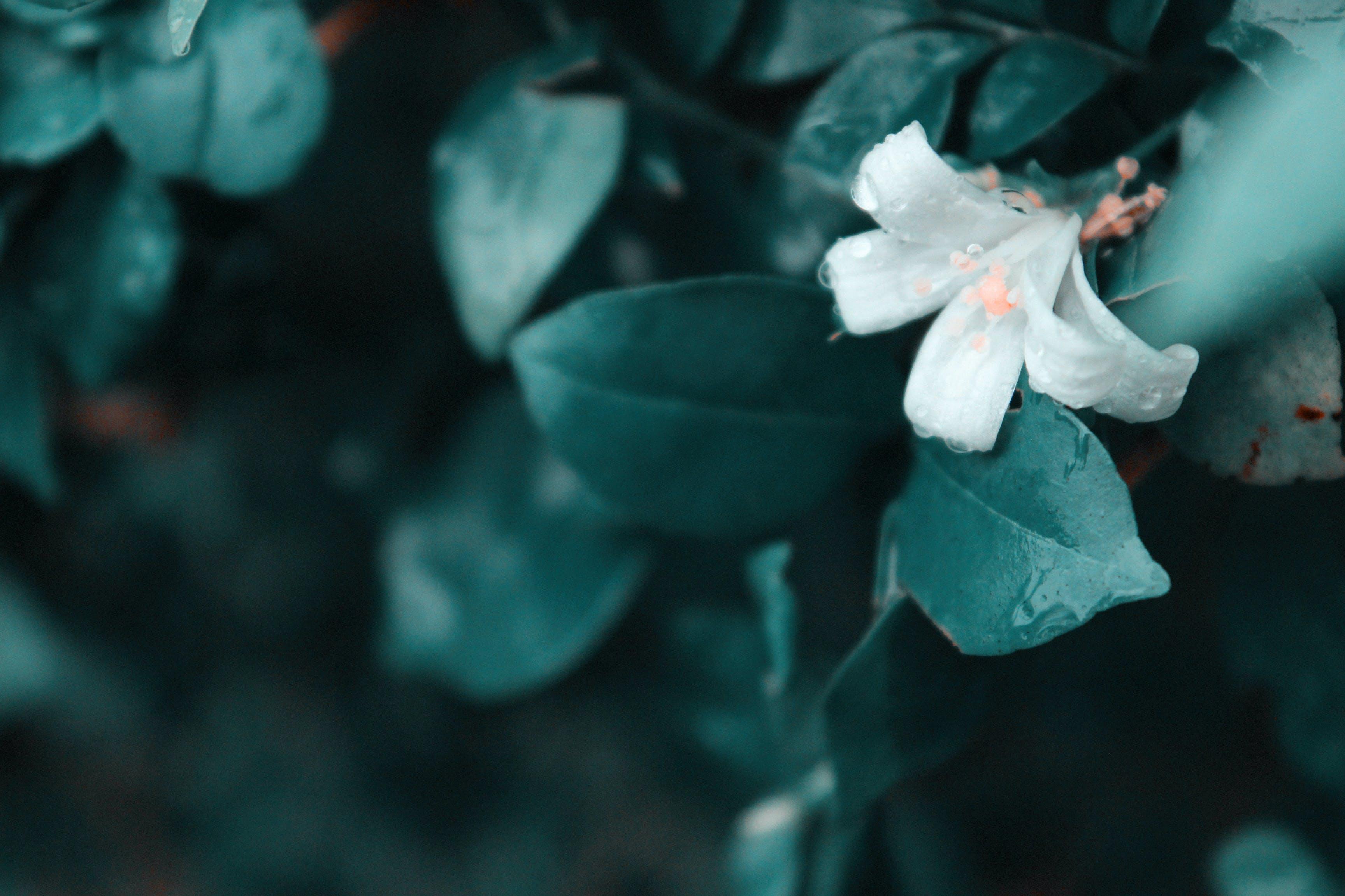 Základová fotografie zdarma na téma 4k tapeta, modrá, rostlina, rozostření