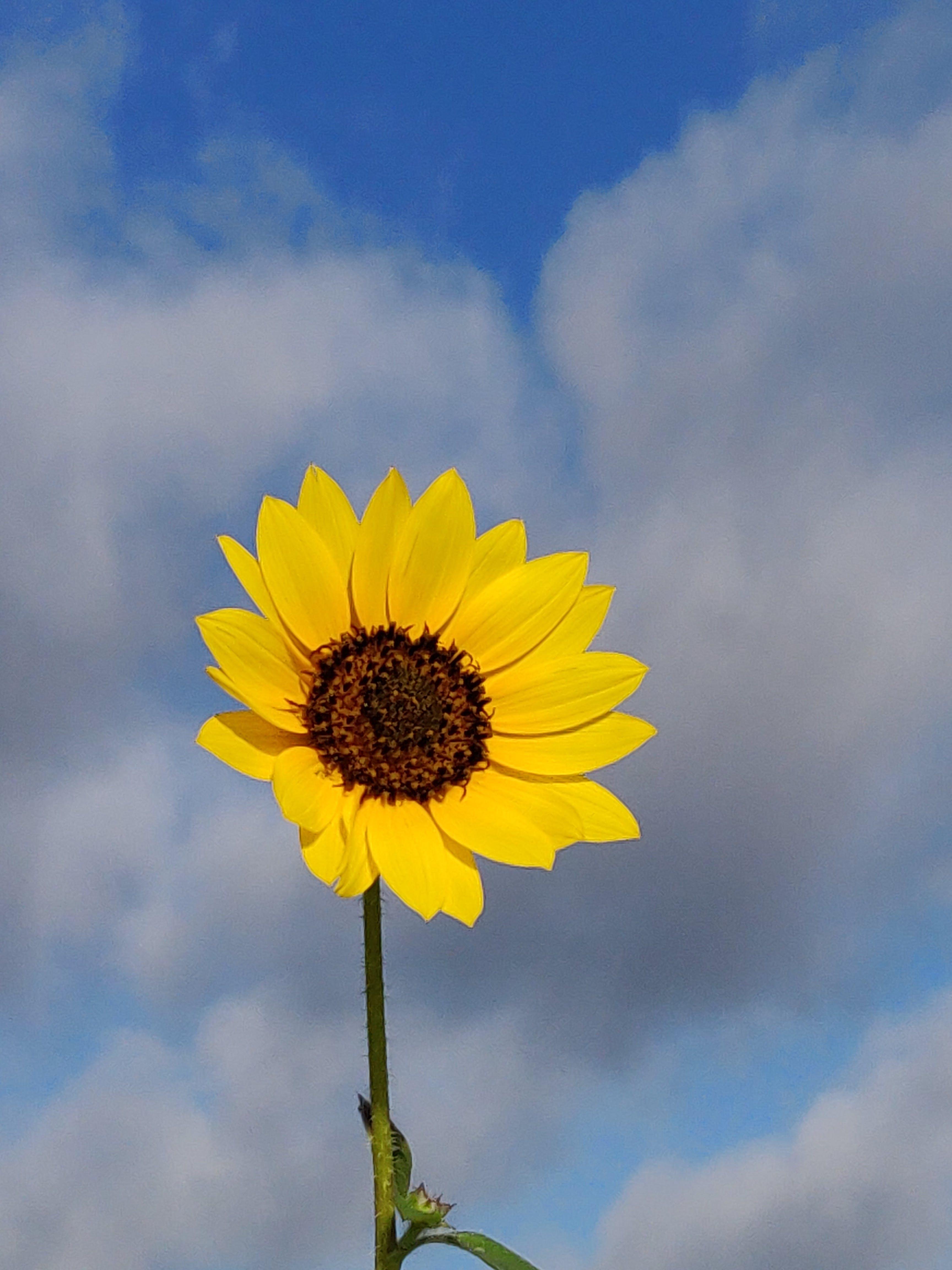 Free stock photo of texas, texas wild flower, wild flower
