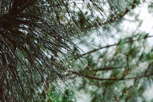 Immagine gratuita di alberi, freddo, goccia, goccia d'acqua