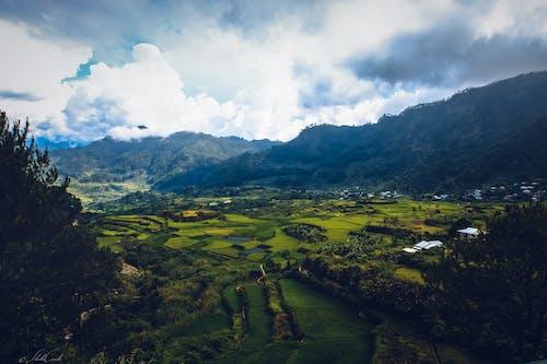 Immagine gratuita di campo, cultura, montagne, riso