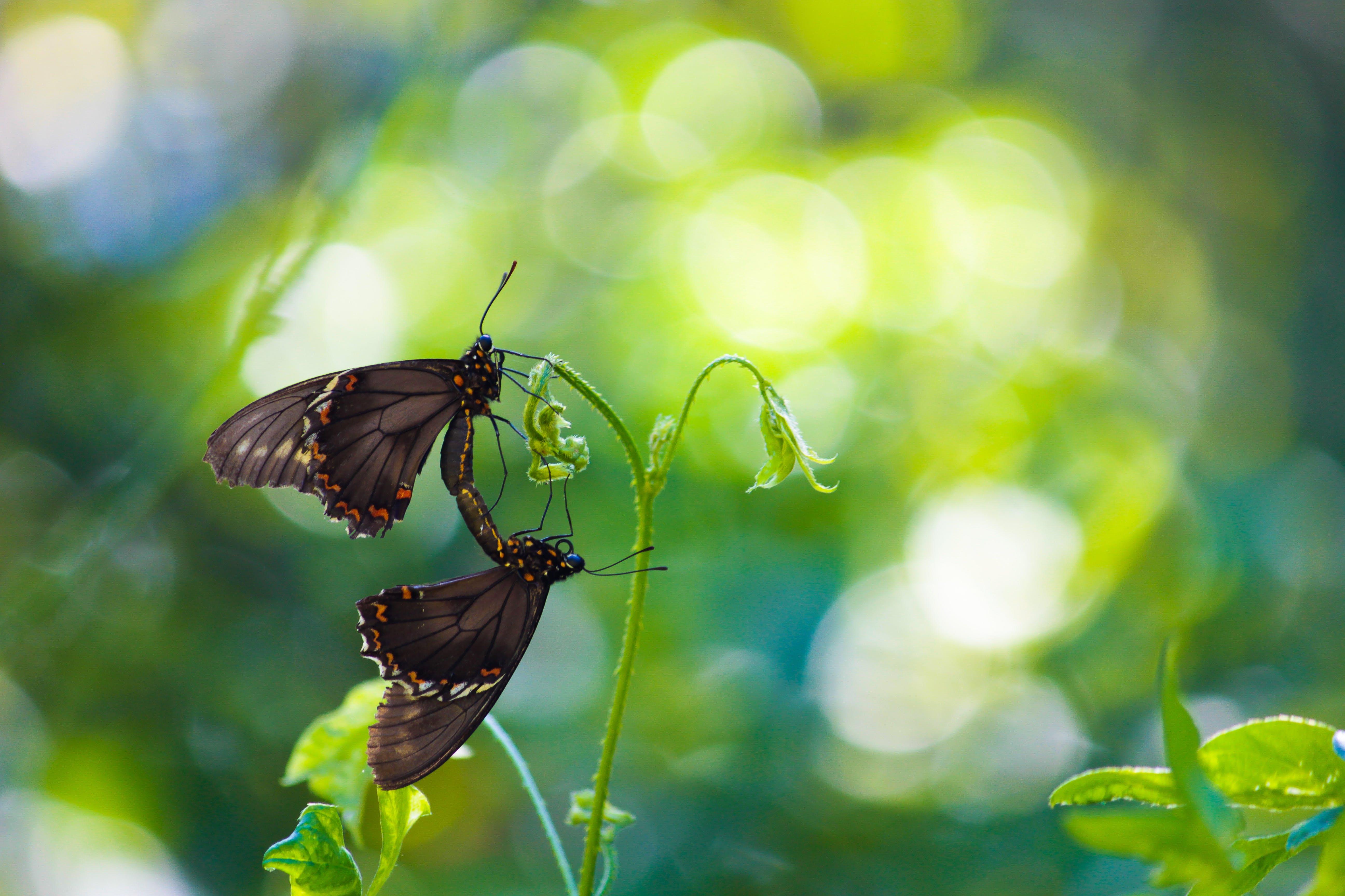 Shallow Focus Photography of Butterflies