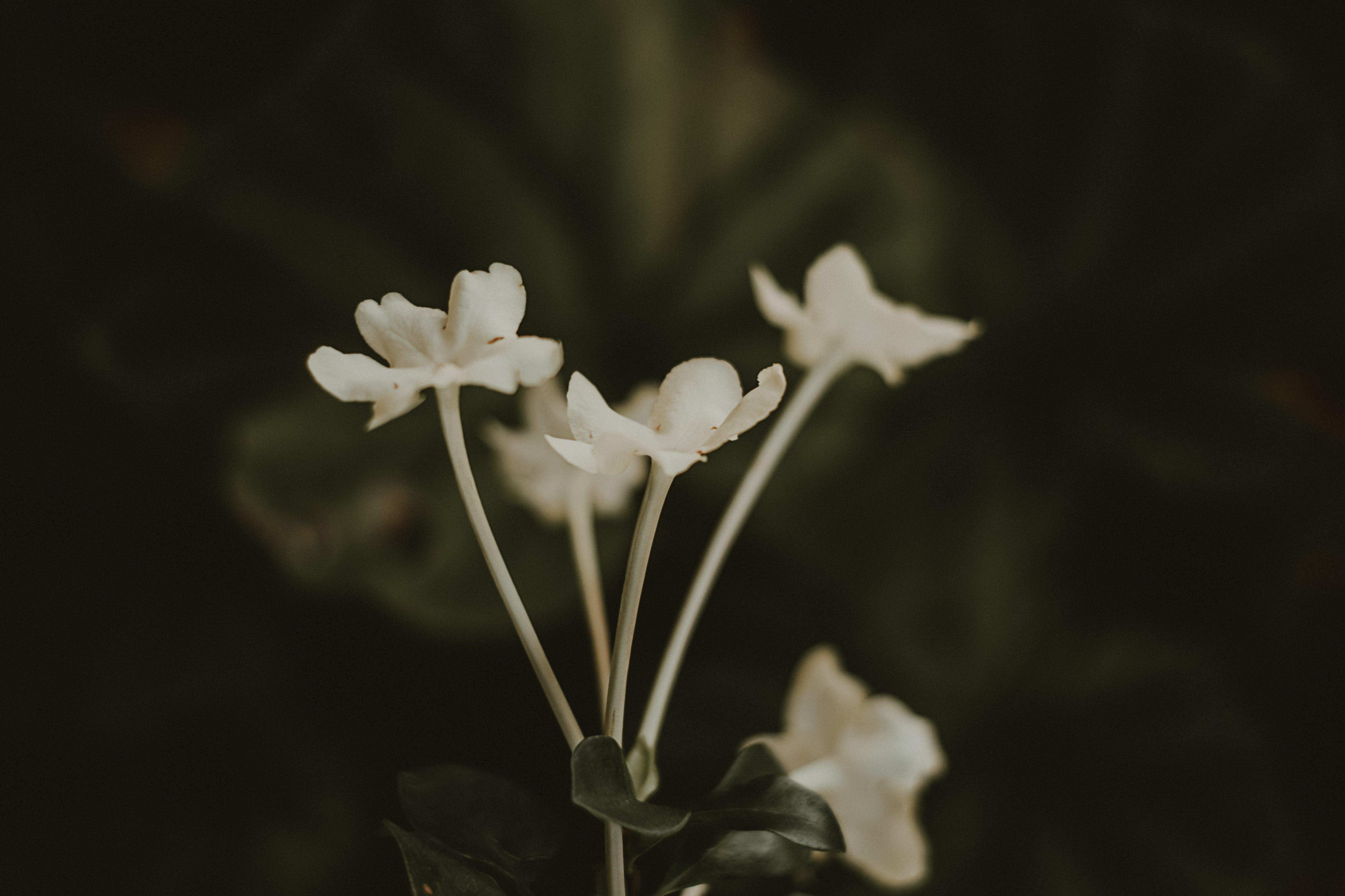 꽃, 꽃잎, 매크로
