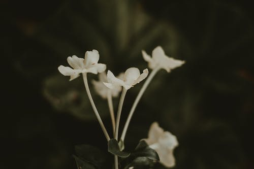Close-up Photo Of White Petaled Flowers