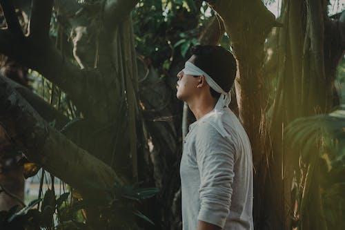 人, 弱势, 樹, 獨奏 的 免费素材照片