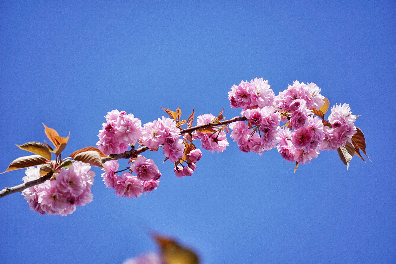 Macro Photo of Petal Flower during Daytime