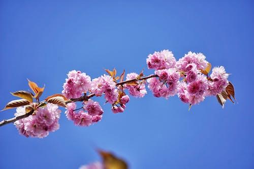 Δωρεάν στοκ φωτογραφιών με άνθη, ανθίζω, δέντρο, κλαδί