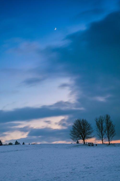 Безкоштовне стокове фото на тему «Nikon, абстрактне фото, завантажити, зима»