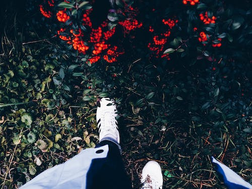 Person in White Sneakers on Green Grass Near Flowering Shrub