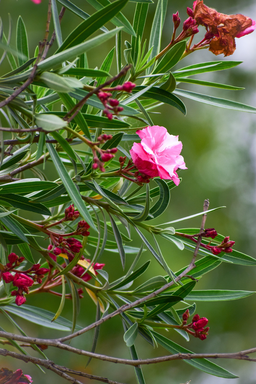 flowers, nature, nature life