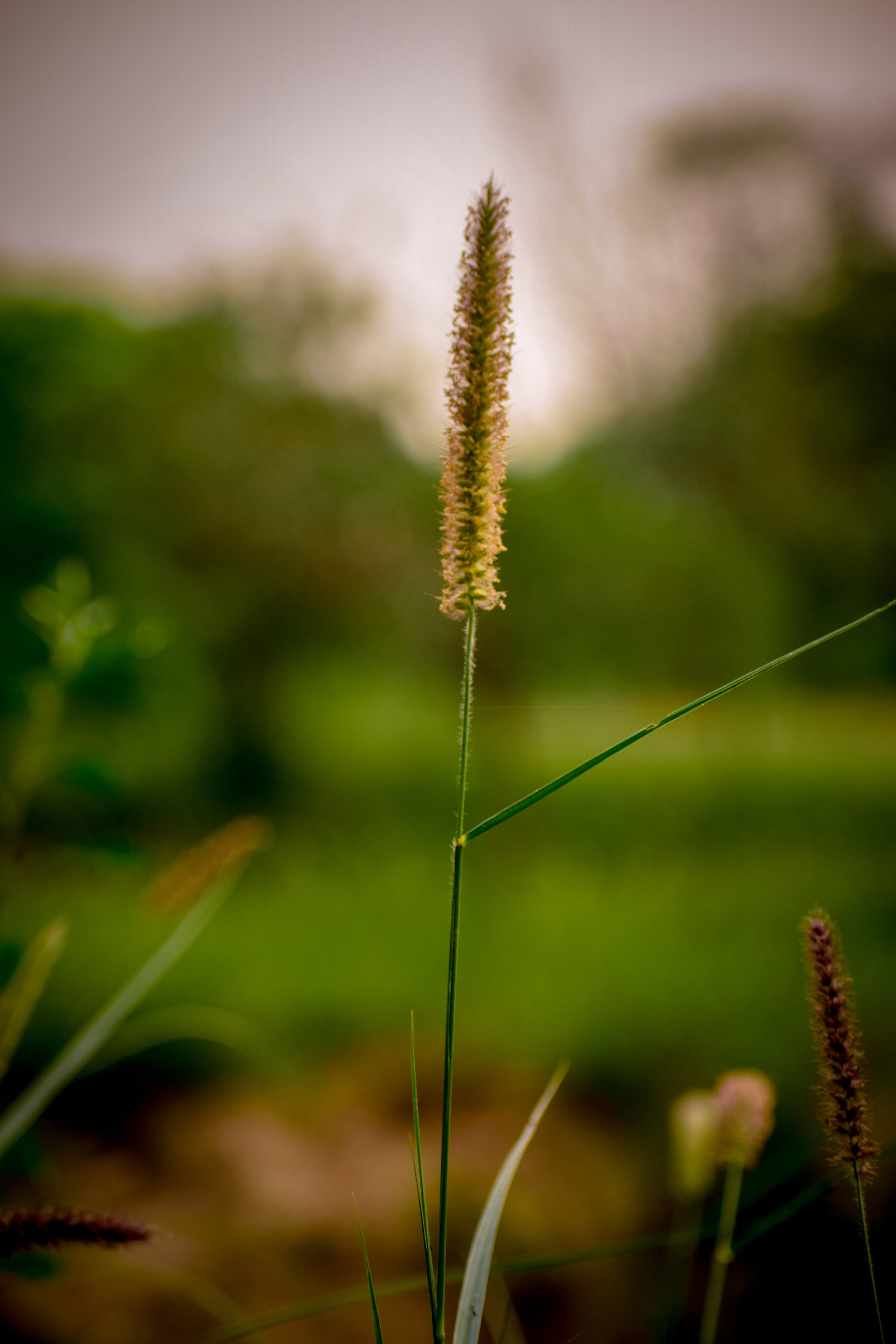 Free stock photo of grass, green, nature park, nature photography
