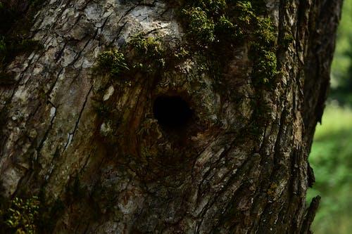 Бесплатное стоковое фото с черная дыра в стволе дерева