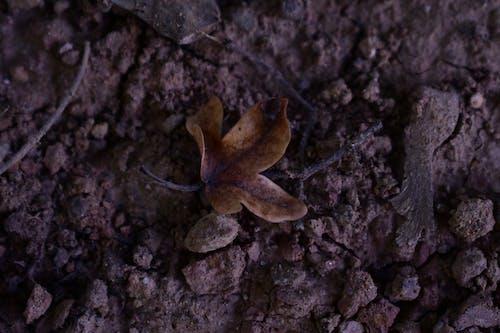 Бесплатное стоковое фото с одинокий сухой лист на земле