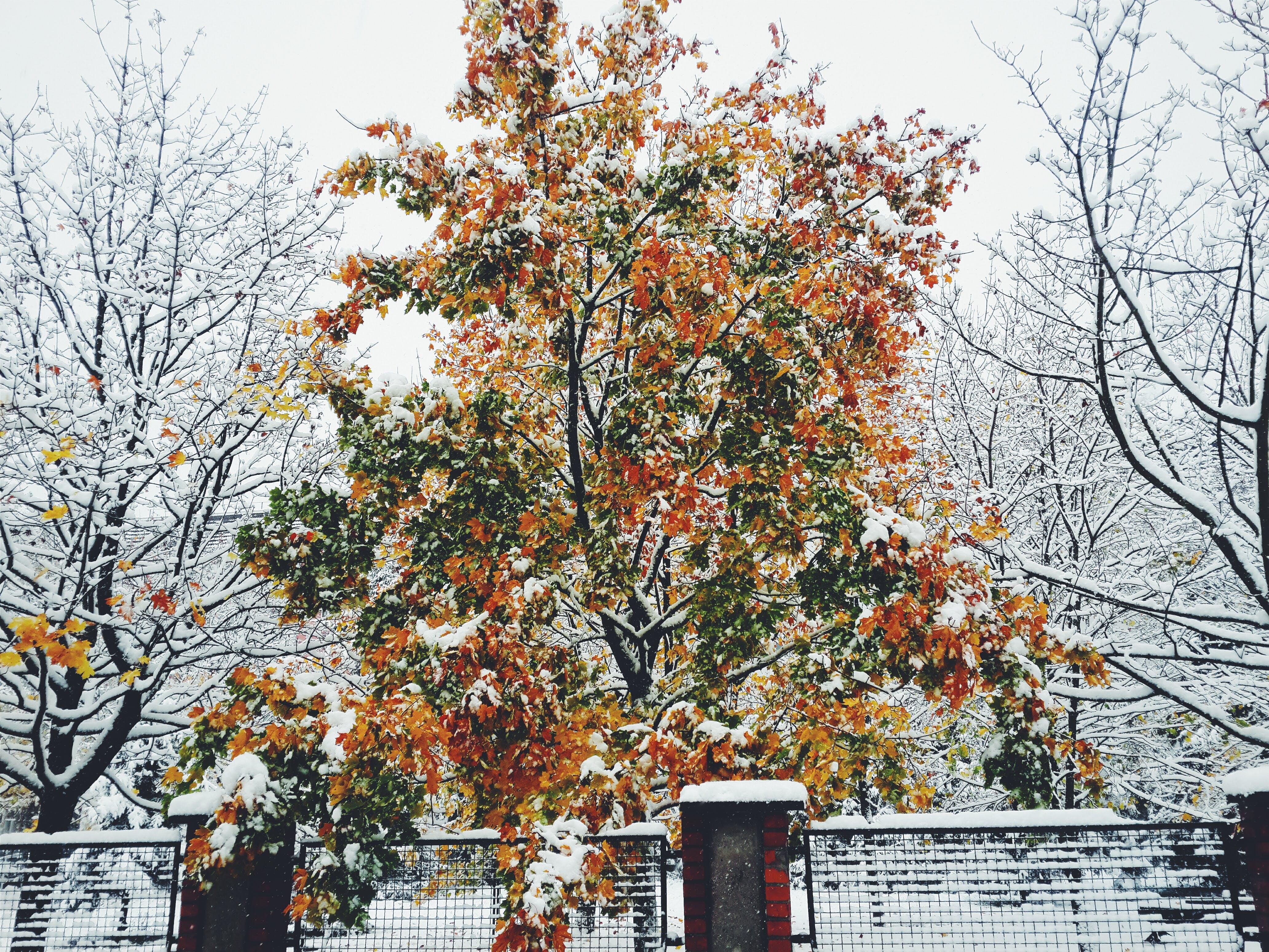 Free stock photo of winter