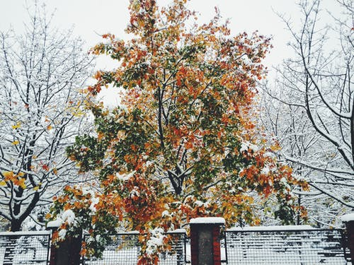 Gratis lagerfoto af vinter