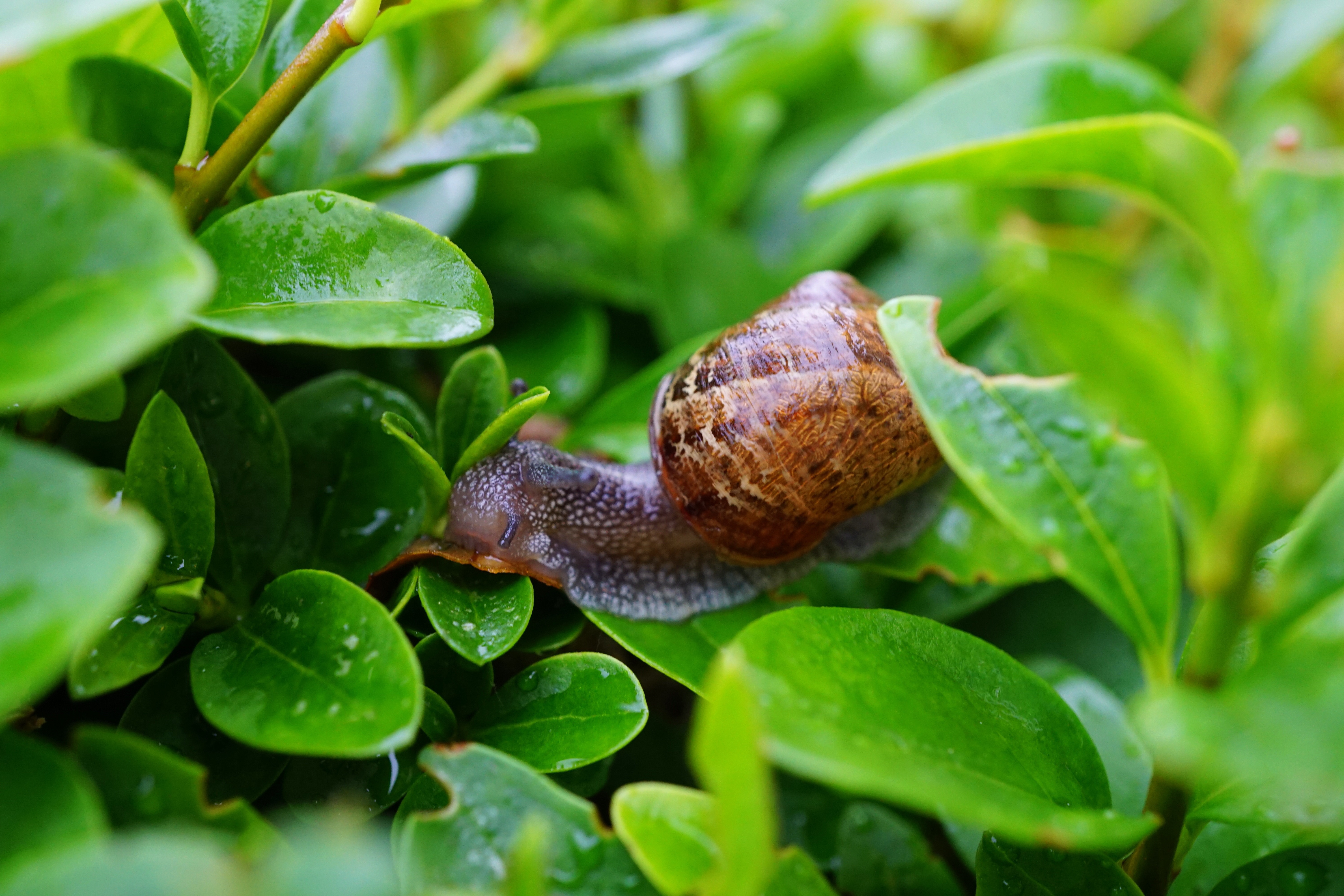 Snail on Green Leaf in Close Up Photography