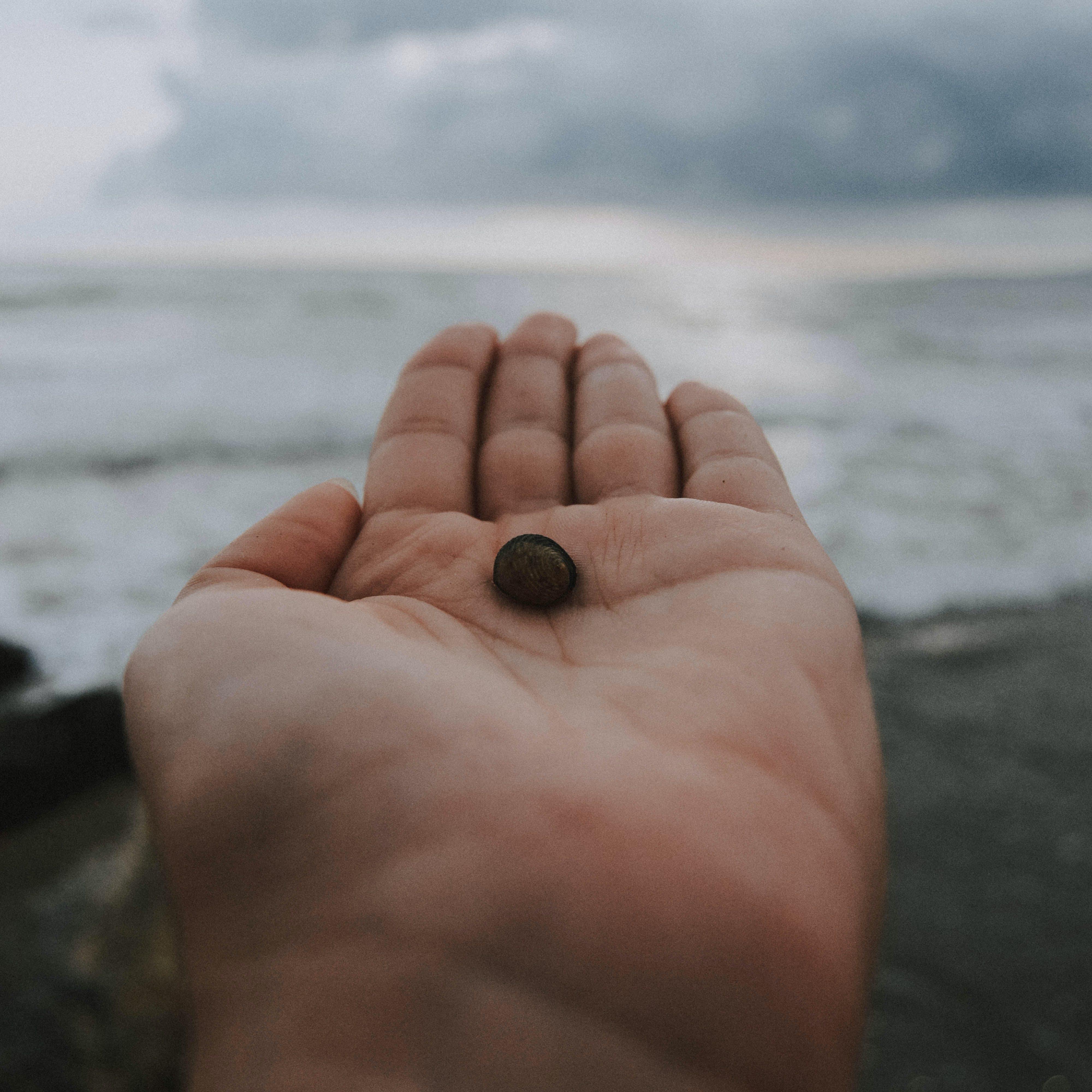 Free stock photo of nature, sky, beach, hand
