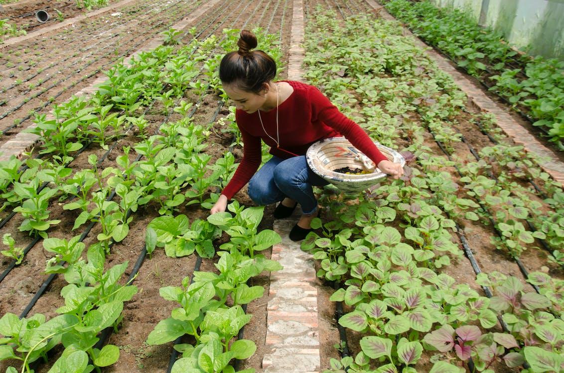 activity, country girl, farmer