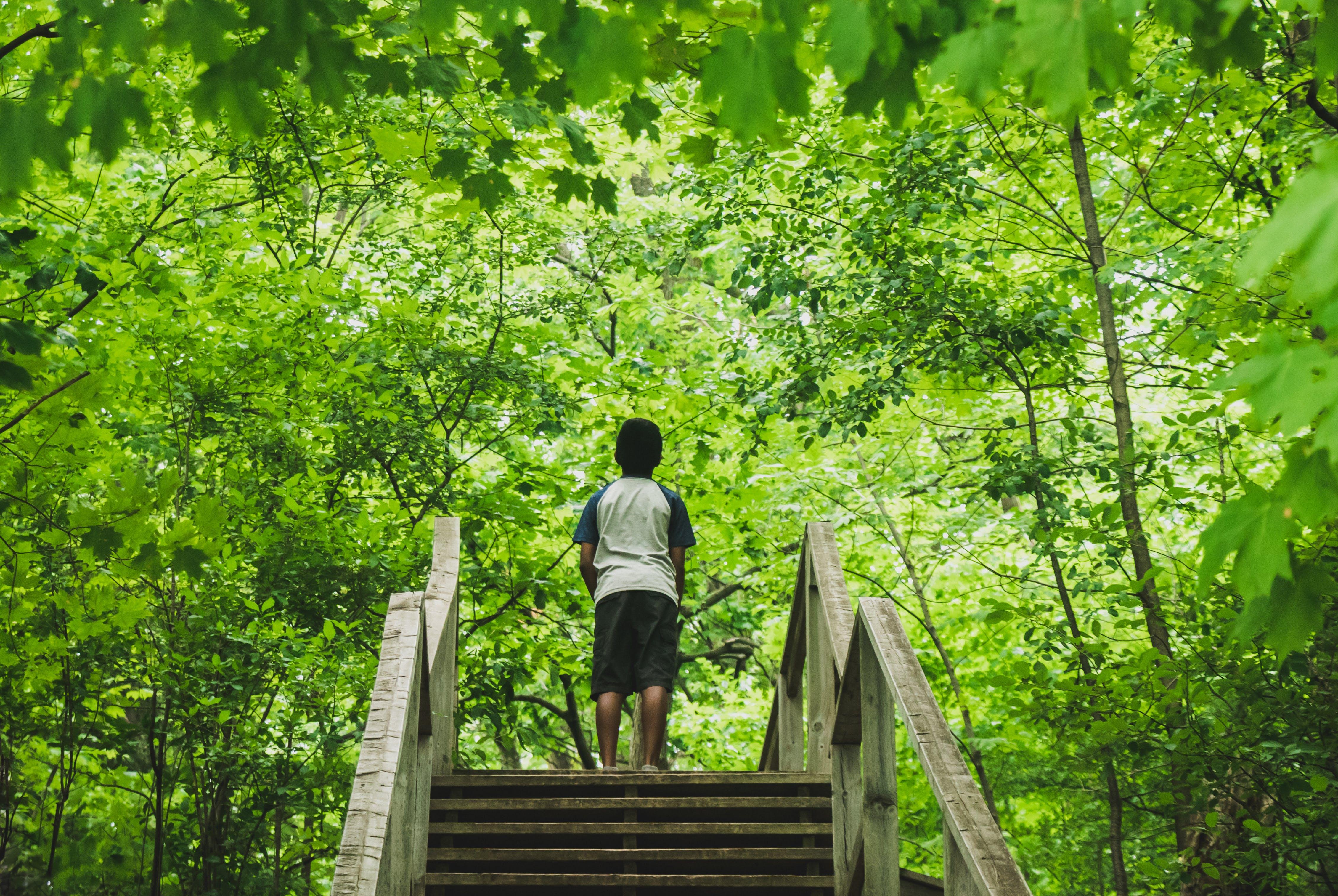 경치, 경치가 좋은, 계절, 나무의 무료 스톡 사진
