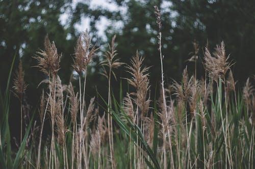 Brown Wheat Field Near Green Trees