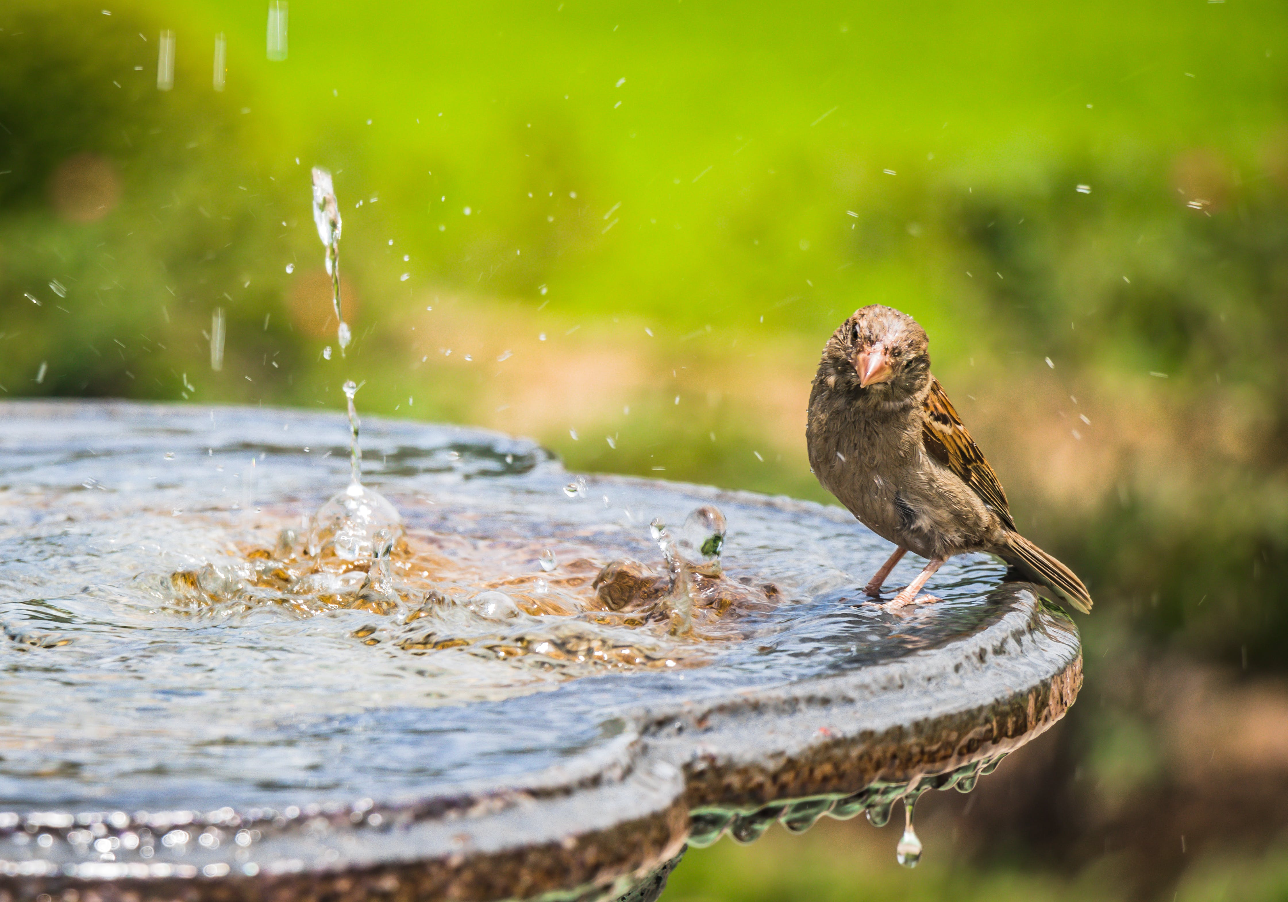 Shallow Focus Photography of Bird Standing on Bird Bath