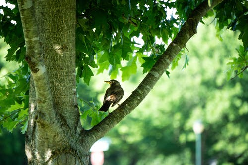 Free stock photo of #birds, #Tree, mother nature, nature