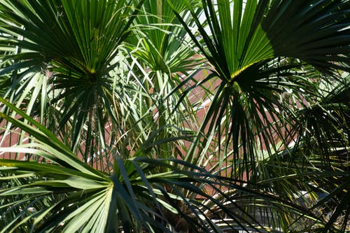 Free stock photo of #Tree, green, palm leaves