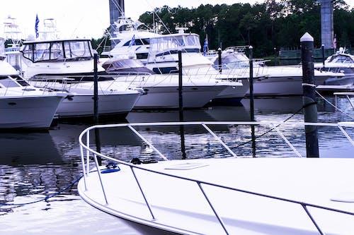 Free stock photo of sail boats