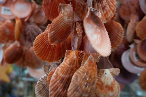 Free stock photo of sea shells, wind chime