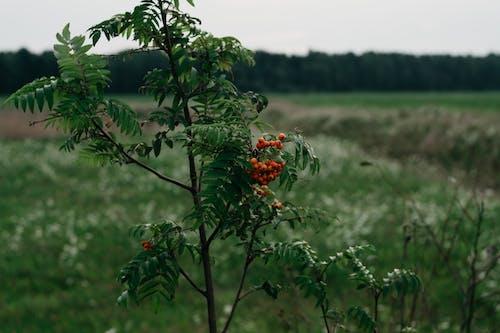 가지, 과일, 구름, 나무의 무료 스톡 사진
