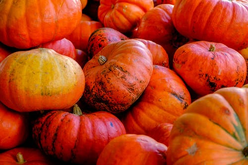 Close-up Photography of Red and Orange Pumpkins