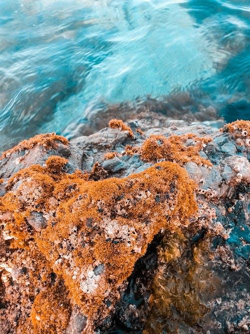 Δωρεάν στοκ φωτογραφιών με rock, ακτή, βρεγμένος, γαλαζοπράσινος