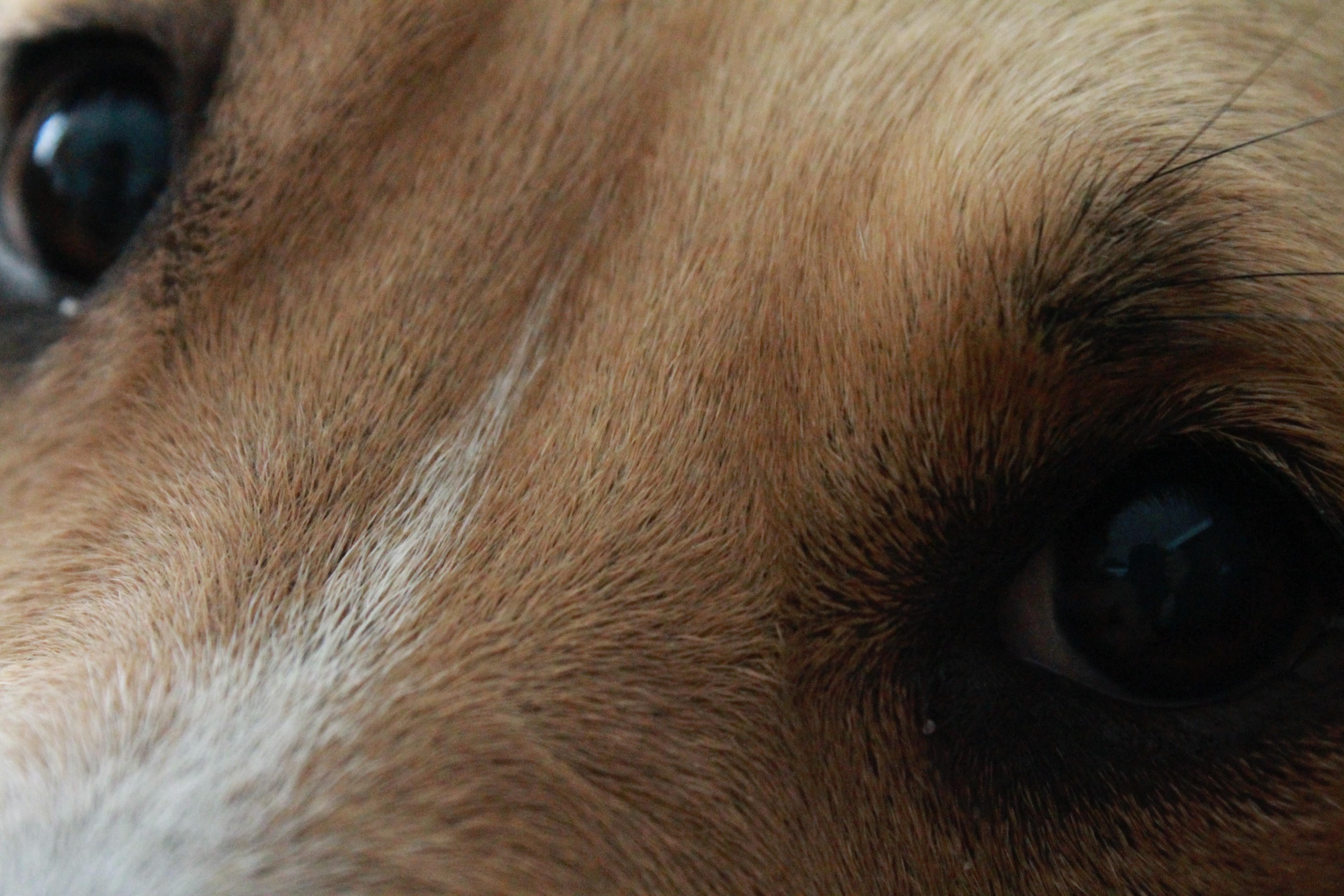 Free stock photo of close-up view, dog, dog eyes