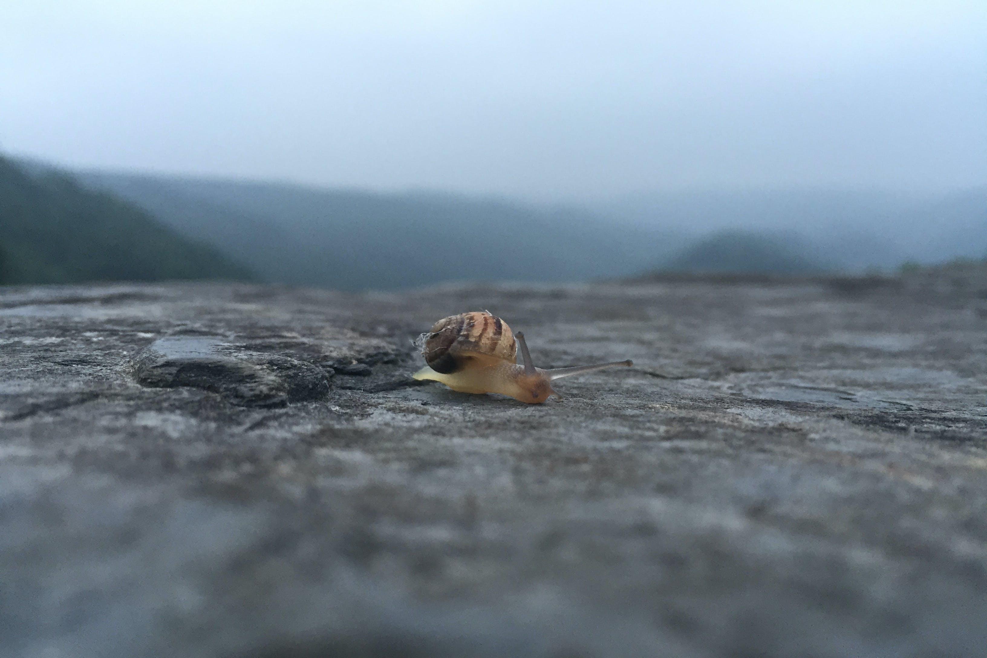 Kostenloses Stock Foto zu berg, nahansicht, natur, nebel
