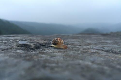 달팽이, 돌, 동물, 산의 무료 스톡 사진