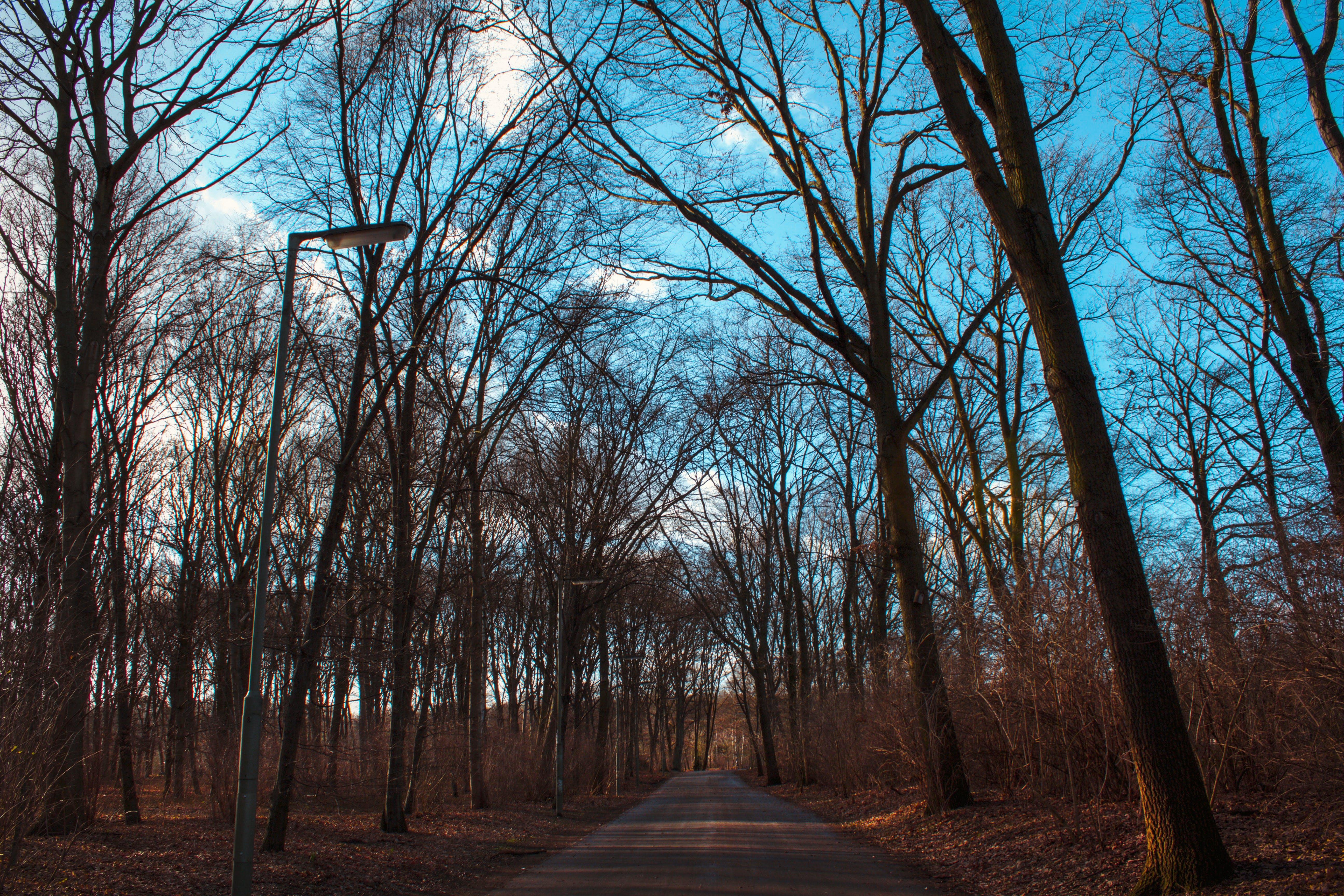 Free stock photo of Adobe Photoshop, berlin, blue, fall