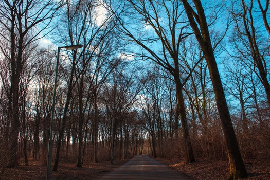 Free stock photo of road, blue, trees, path